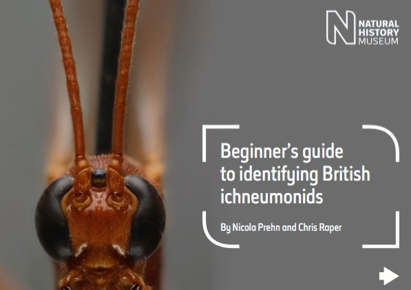 british-ichneumonid-wasps-id-guide_pdf__page_1_of_50_.jpg