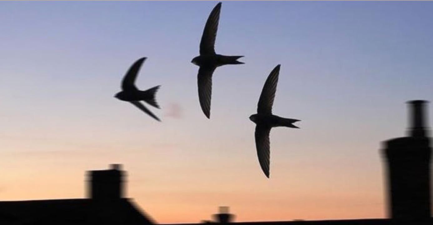 A Swift Half