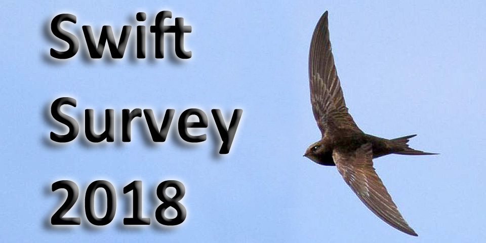 Swift Survey 2018