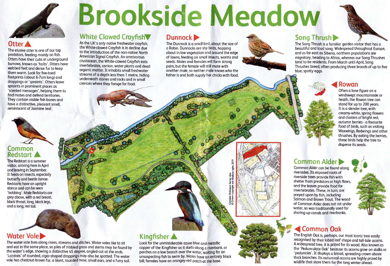 Brookside Meadow, Glenfield | NatureSpot