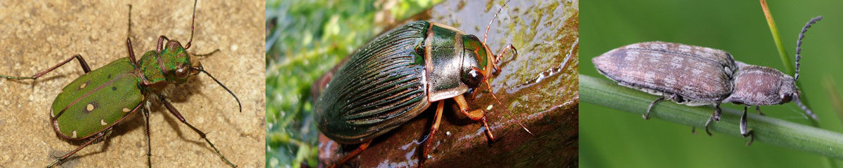 GroupID-header-beetles_1200.jpg