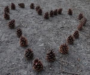 cone heart