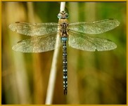 MBNats_2019_04_DragonfliesGardens.jpg