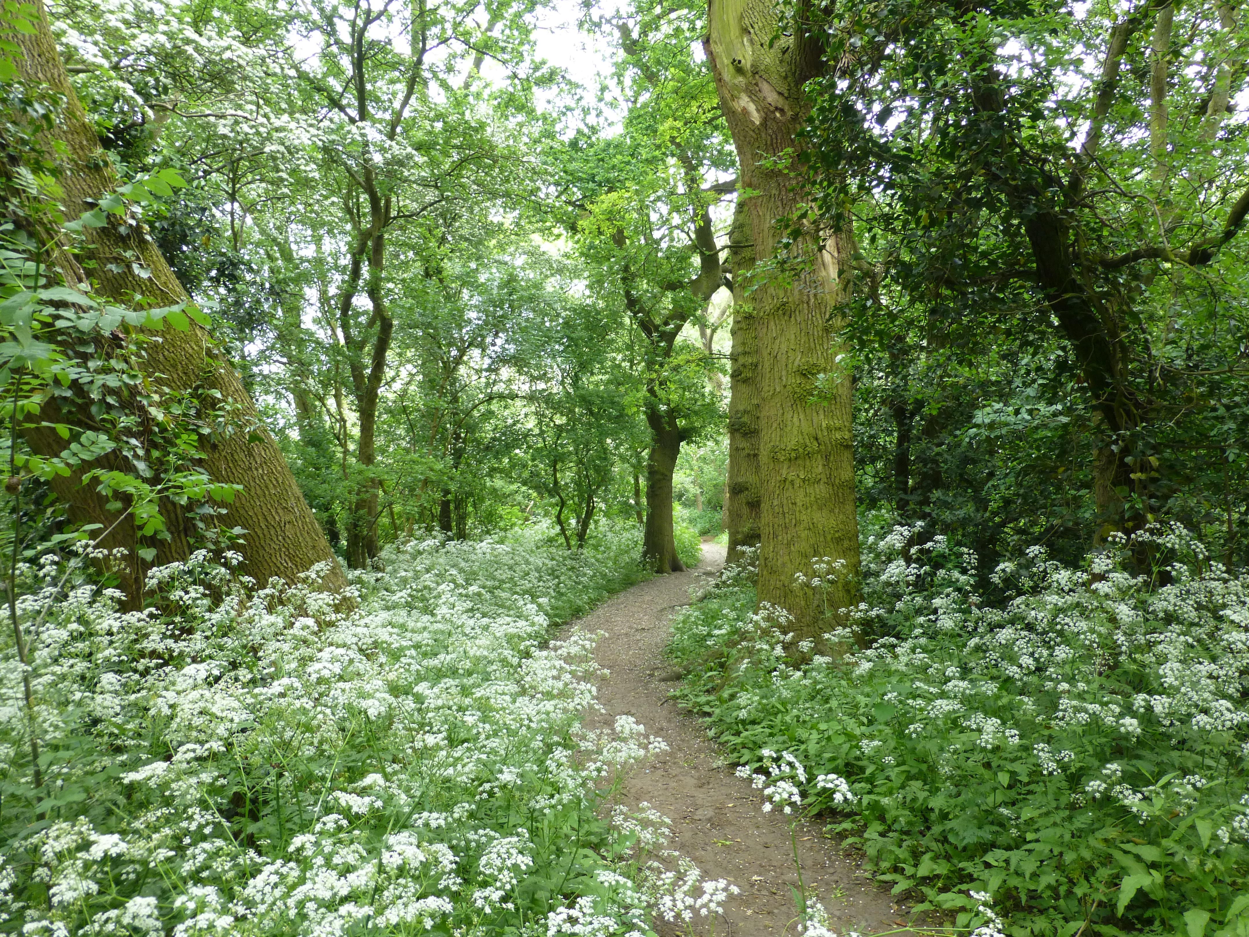 Quarry Shade Garden At Bon Air Park: Flude's Lane, Oadby