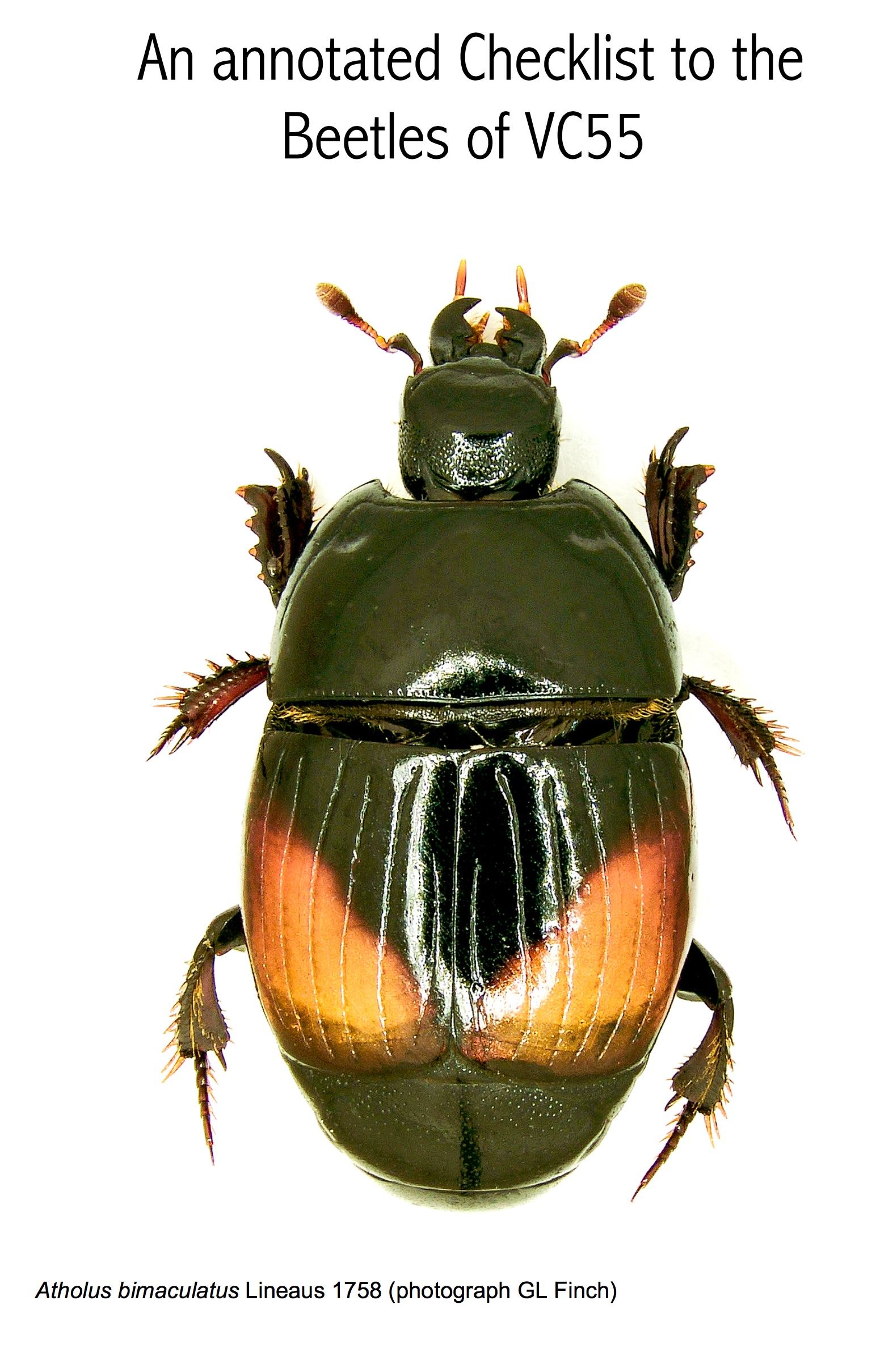 Annotated Checklist to the Beetles of VC55