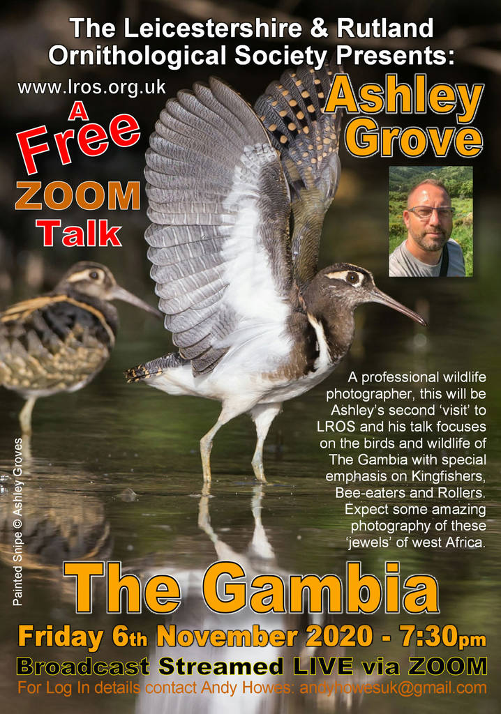 Birds and Wildlife of The Gambia