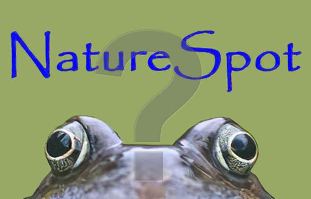 Ask NatureSpot