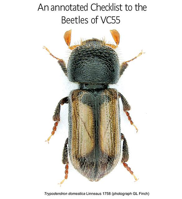 Beetles Checklist