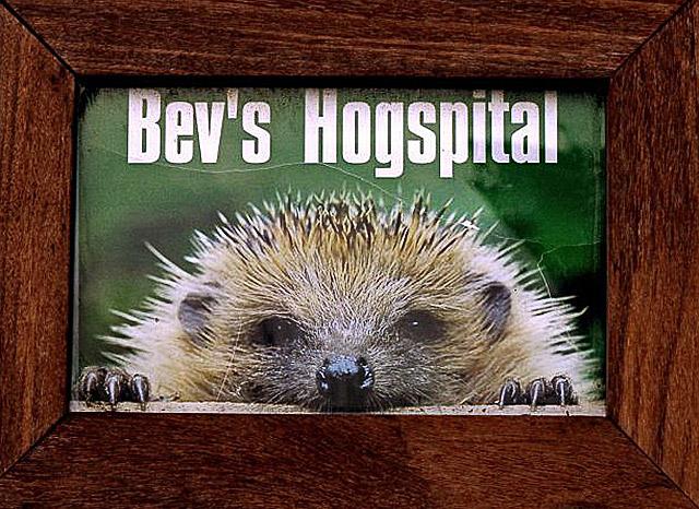 Bevs Hogspital