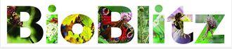 bioblitz logo
