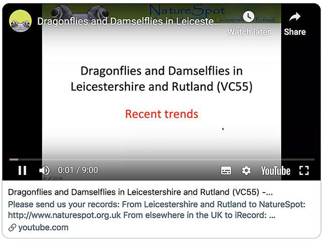 Dragonflies2 Video