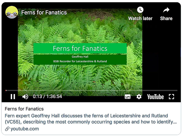 Ferns for Fanatics