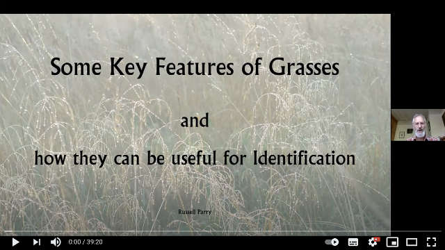 Two New Videos on Grasses