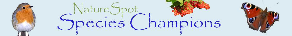 species champion banner