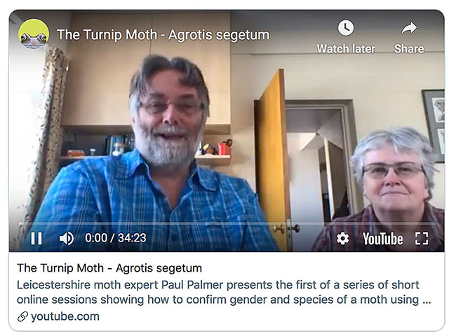 Video - Turnip Moth