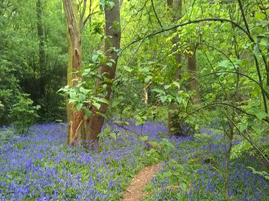 Holly Hayes Wood